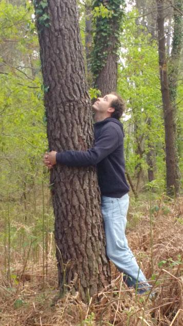 a comme arbre a propos